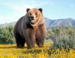 Опасности на каждом шагу: главу британского МИД предупредили о медведях гуляющих по Москве