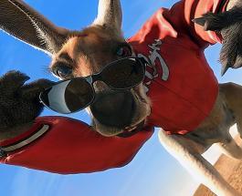 Хит дня: человек и кенгуру устроили драку на улице средь бела дня