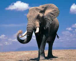 Забавное видео: слон напал на автобус и грузовик на Юго-западе Китая - пострадавших нет
