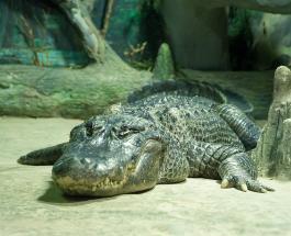 Аллигатор запрыгнул в лодку с туристами во Флориде