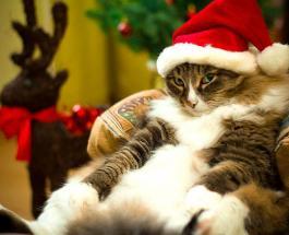 Смешное видео: ленивое Рождество – что может быть лучше