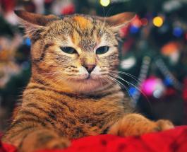 Смешные фото животных: как домашние любимцы радуются новогодней елке