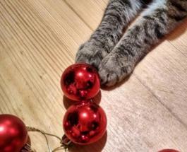 Кот против елки: противостояния в реальной жизни