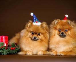 Открытки с Новым годом в стихах: лучшие поздравления для родных и близких