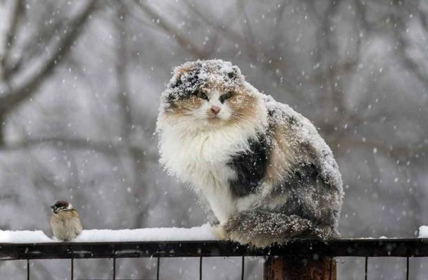 снег кошка
