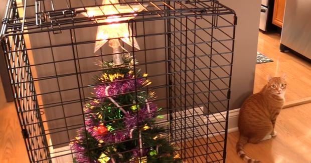 Можно поставить елку в клетку