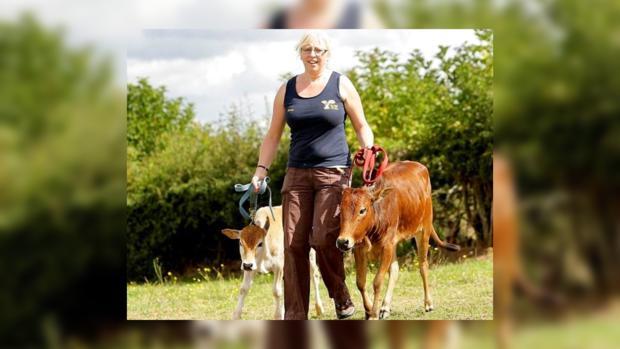 США: фермер разводит карликовых коров для дома