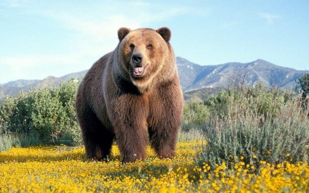 медведи в Москве
