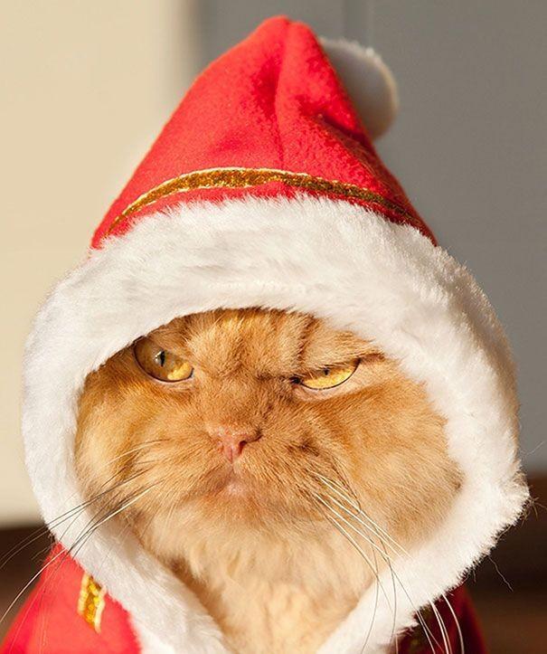 краям новые прикольные картинки котов дом пеноблоков пенобетона