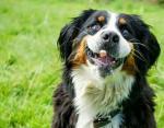 Забавные фото животных: милые песики поднимут настроение в моменты грусти
