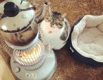 """Фото кота """"влюбленного"""" в обогреватель покоряют сердца пользователей Сети этой зимой"""
