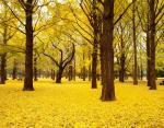 Парк Ёёги, Токио, Япония
