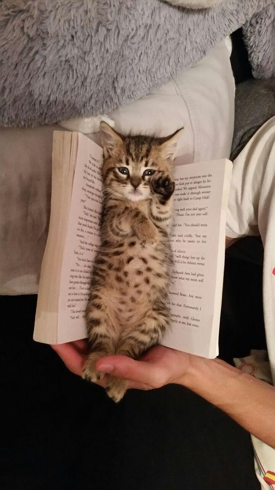 Ученые доказали: кот в доме - источник силы и легкости для своего хозяина