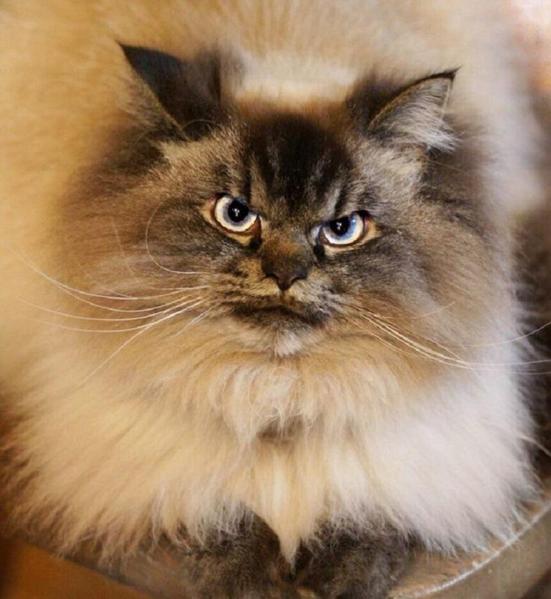 выгодные самый злой кот фото такой