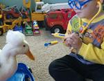 Малыш лечит гуся