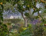 Утренний туман и спелые фрукты