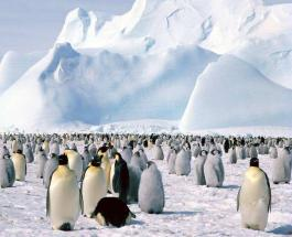 Самый зимний географический тест: что вы знаете про Арктику и Антарктиду
