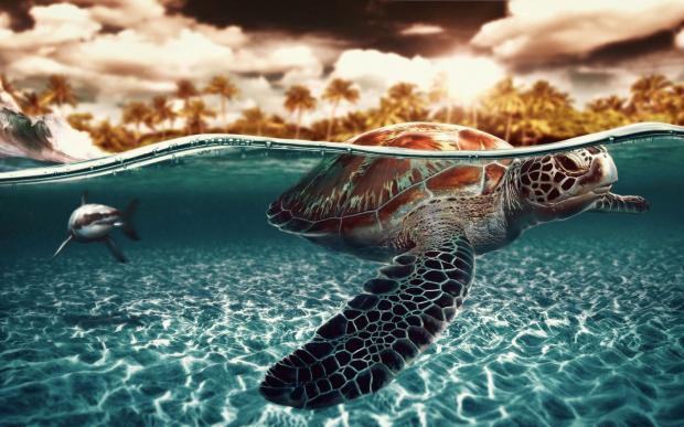 черепаха и акула