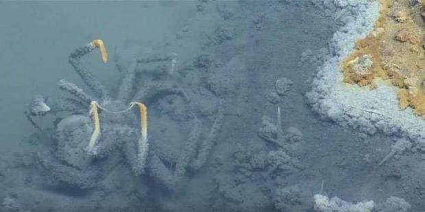 ВМексиканском заливе существует смертоносное озеро