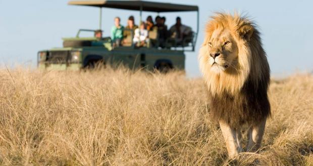 Зуб за зуб: львы в национальном парке Южной Африки на смерть загрызли браконьера