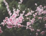 День весеннего равноденствия: что нужно знать о значении праздника 20 марта