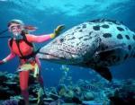 Кто обитает на дне океана: ученые нашли новые виды рыб на Карибском коралловом рифе