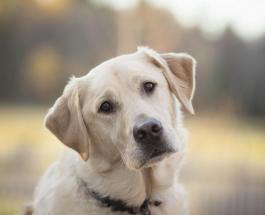 В Чернобыле рабочие спасли собаку забравшуюся на саркофаг атомного реактора