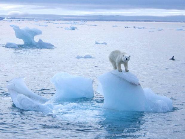 Аномально высокую температуру воздуха зафиксировали американские ученые на Северном полюсе