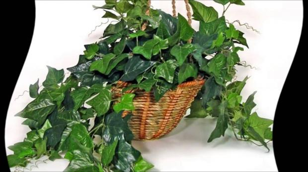 Топ-5 комнатных растений которые не стоит держать в детской комнате – мнение педиатров