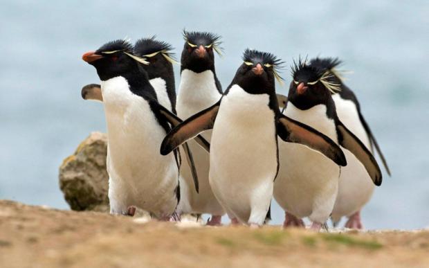 ВАнтарктиде пингвины отыскали камеру исделали селфи— Хит наYouTube