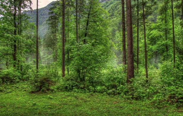Китай. Віртуальні дерева…