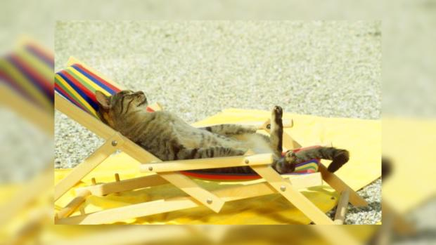 Приколы про котов: фото пушистых созданий в состоянии полного релакса