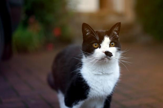 Уроки жизни от кота: чему могут научить человека братья наши меньшие