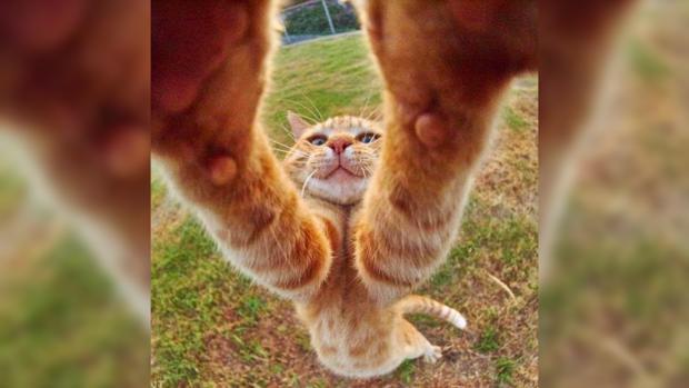 Приколы про котов: фото животных которые демонстрируют великолепную растяжку