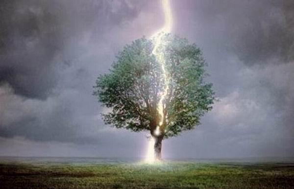Под каким деревом нельзя прятаться от грозы - любопытная статистика ученых