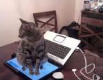 Не сидеть на клавиатуре? Хорошо, хозяин!