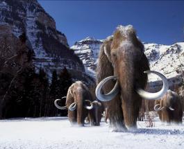 """Ради спасения Арктики ученые намерены заселить ее """"воскресшими"""" мамонтами"""