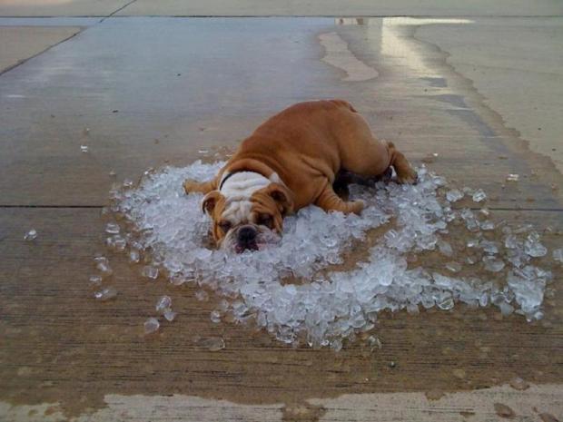 Скоро жара: как организм человека реагирует на высокую температуру воздуха