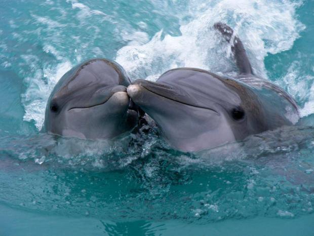 Редкие кадры рождения дельфина в дикой природе засняли волонтеры в Австралии