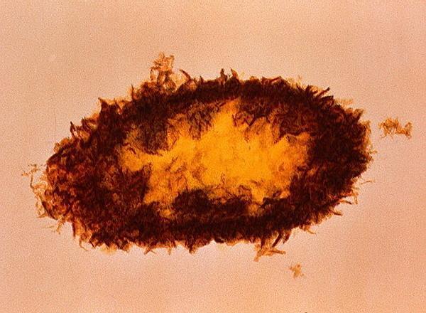 Бактериюшечка