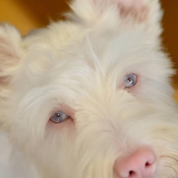 Розовый нос