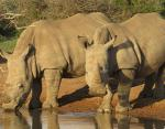 Власти Кении рассматривают введение высшей меры наказания для браконьеров