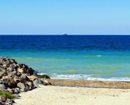 Черное море стало чище: ученые обнаружили рост водорослей которые растут только в чистой воде