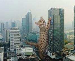 """Смешные фото: гигантские коты в исполнении фотохудожника """"захватили власть"""" над миром"""