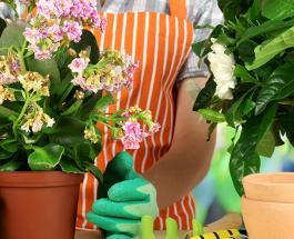 Мошки в комнатных растениях: как избавиться от мелких вредителей
