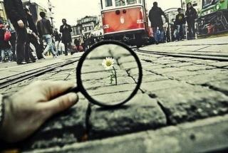 Умные фразы: жить правильно невозможно но учиться нужно всегда