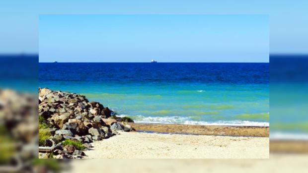 Русские ученые утверждают, что Черное море стало чище