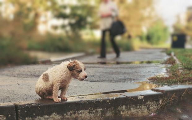 В Ингушетии местные власти установят теплые домики для бездомных животных