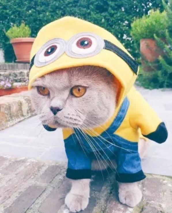 Самые смешные коты в оригинальных нарядах: 20 усатых модников