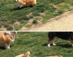 Все собаки смотрят на мяч! Что с ней не так?